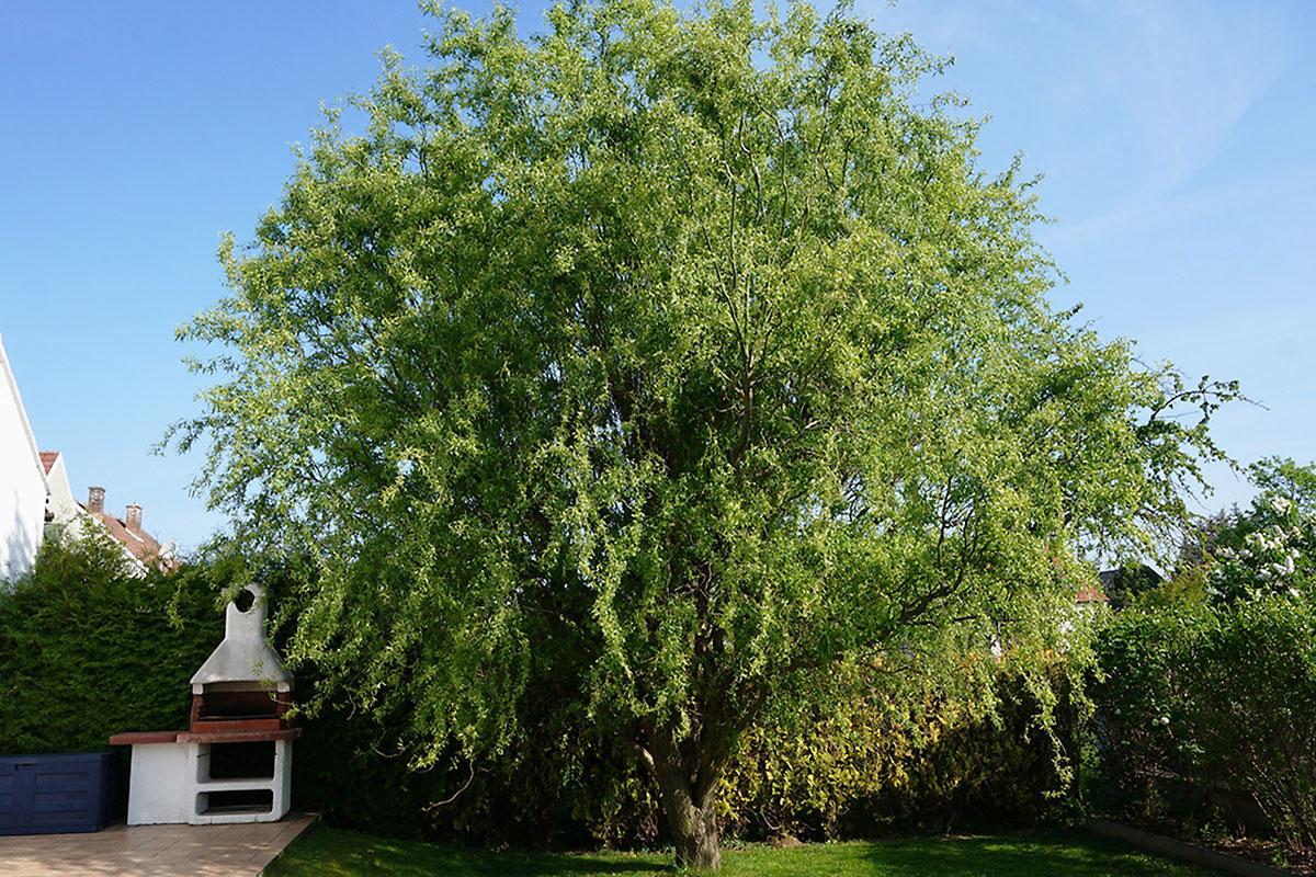 Ratgeber So Bleibt Der Garten In Form Bäume Im Garten Richtig