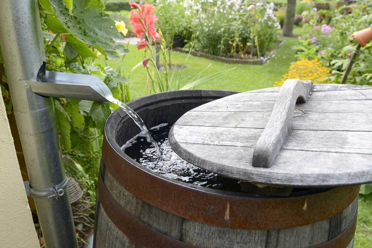 regenwassernutzung: regenwasser sammeln und einsetzen - ratgeber