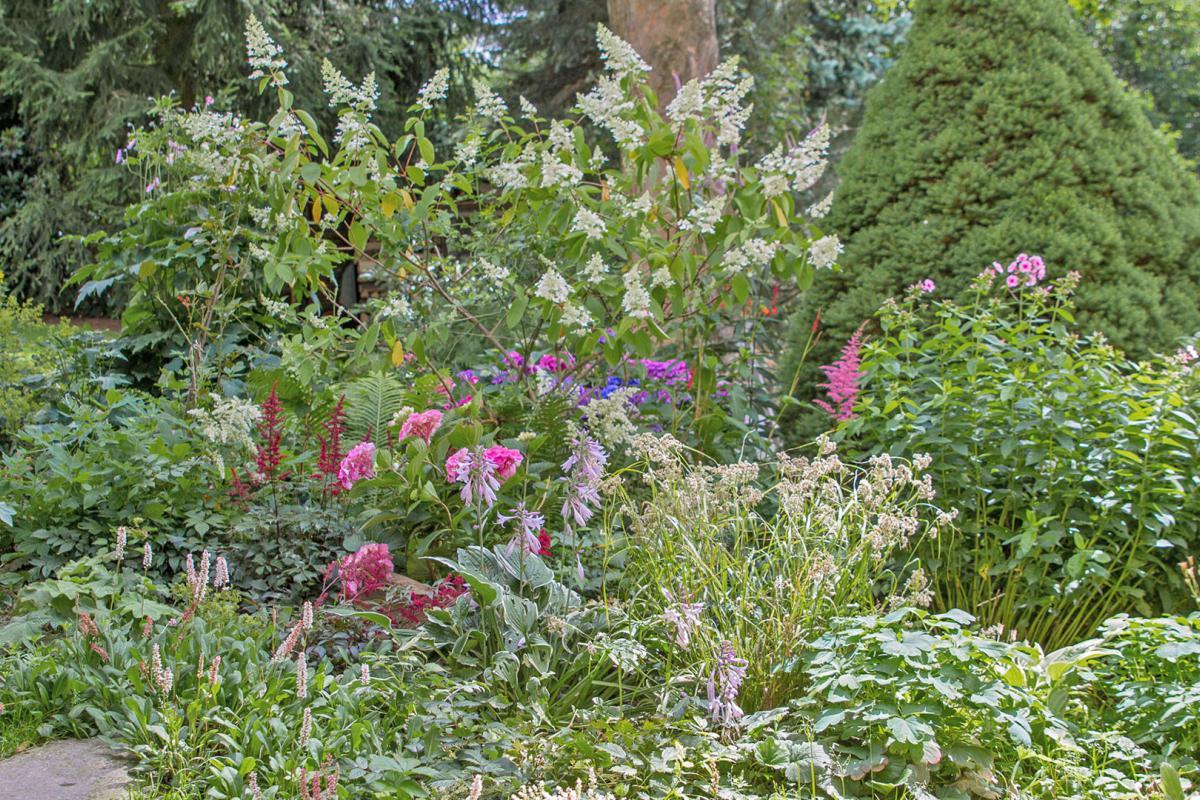 Fabelhaft Der Schattengarten – Buntes Leben im Zwielicht - Garten @ diybook.at @HH_39