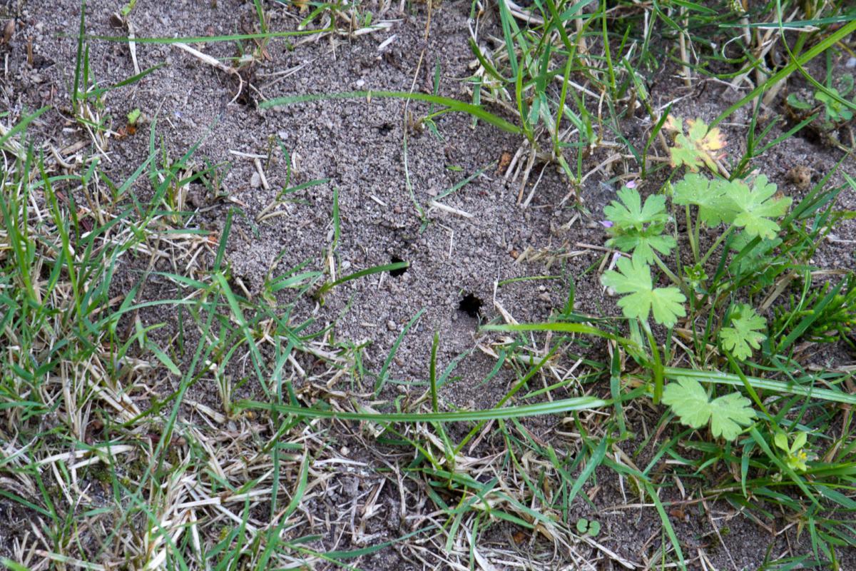 Ameisen Naturlich Bekampfen Garten Diybook At