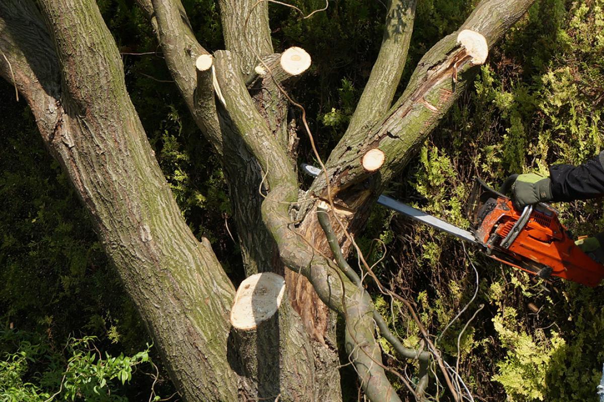 Hervorragend Baum selber fällen - Anleitung zum Fällen einer Weide @ diybook.at WO58