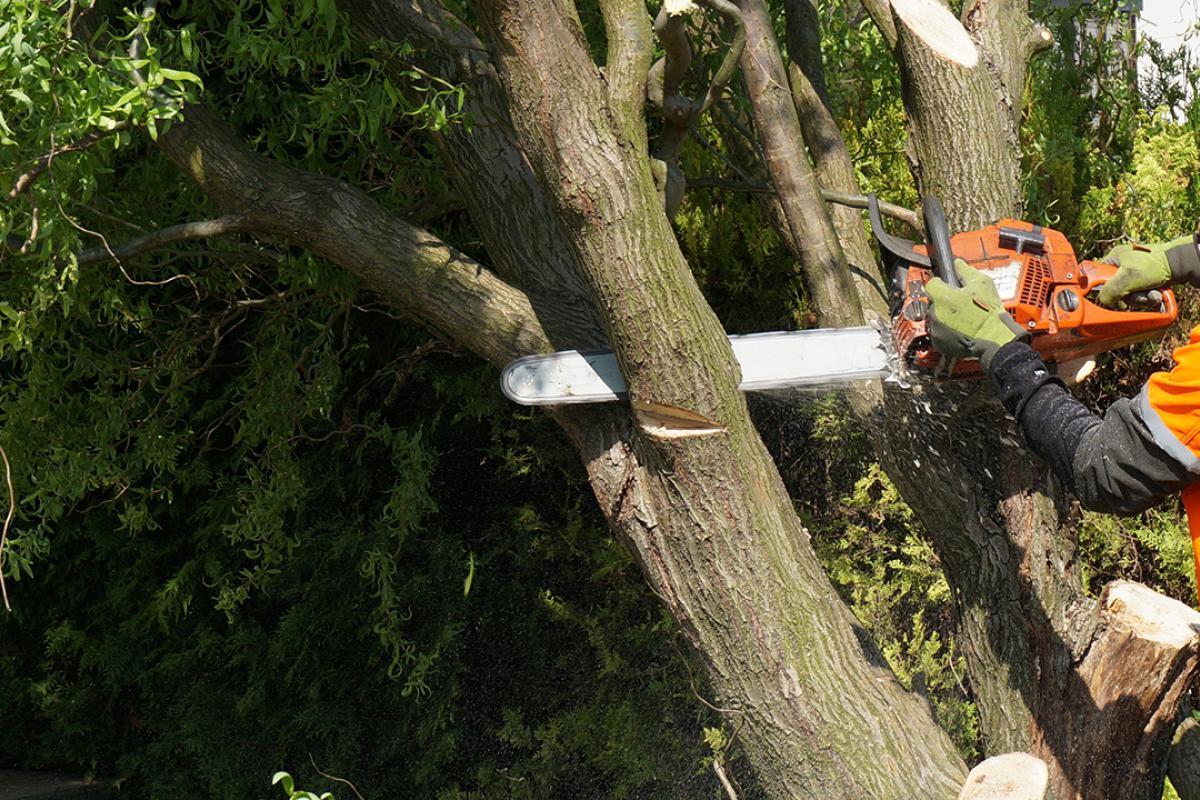 Favorit Baum selber fällen - Anleitung zum Fällen einer Weide @ diybook.at QK56