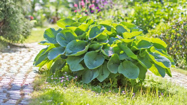 Die 10 Attraktivsten Blattschmuckpflanzen Garten At Diybookat