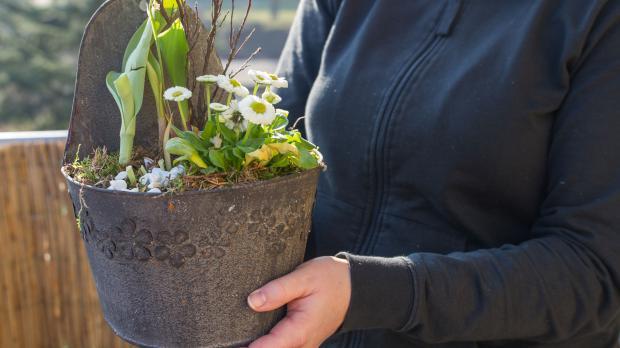 verblühte tulpen ausgraben