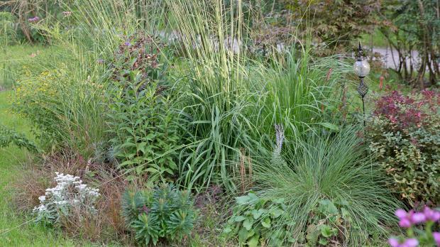 Flower Power Saisonal Den Garten Verschonern Garten Diybook At
