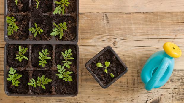 Pflanzen vorziehen mit Kindern