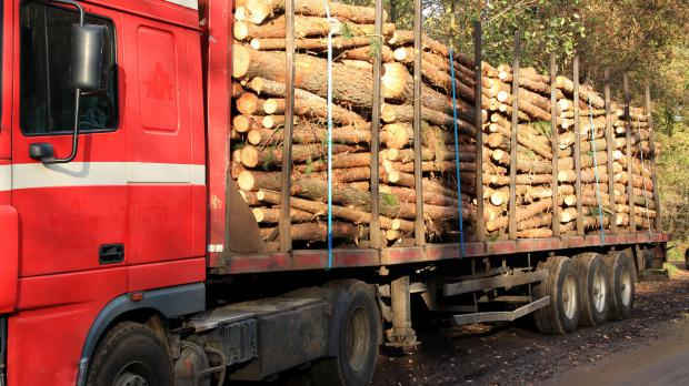 Kurze Transportwege bei der Holzlieferung