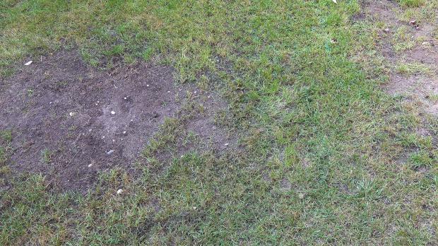Alter Rasen mit Fehlstellen