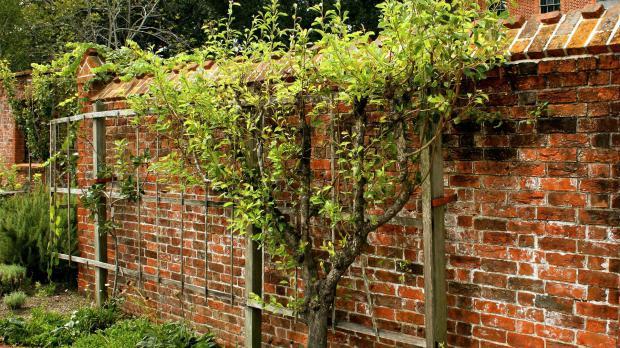 Super Sichtschutz für den Garten: Das sind die besten Optionen - Garten FD55