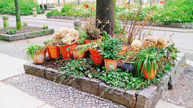 Urban horticulture article