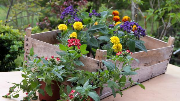Blumenkasten Bepflanzen Anleitung Diybook At