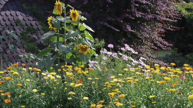 Naturgarten mit heimischer Flora und Fauna