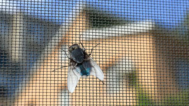 Fliege sitzt am Drahtgitter