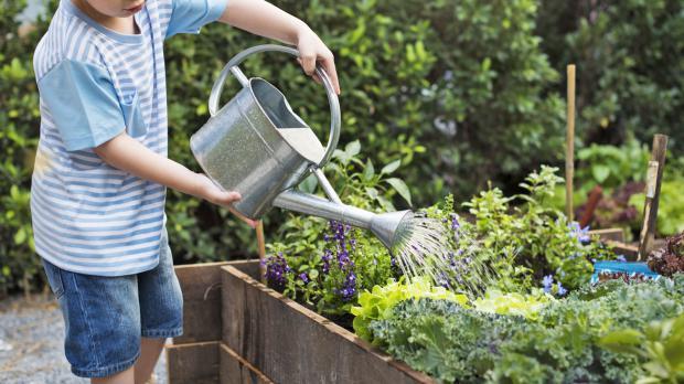 Pflanzenpflege im Hochbeet