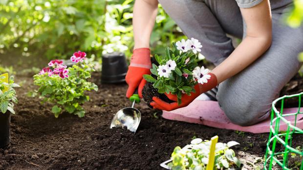 Garten pflegen