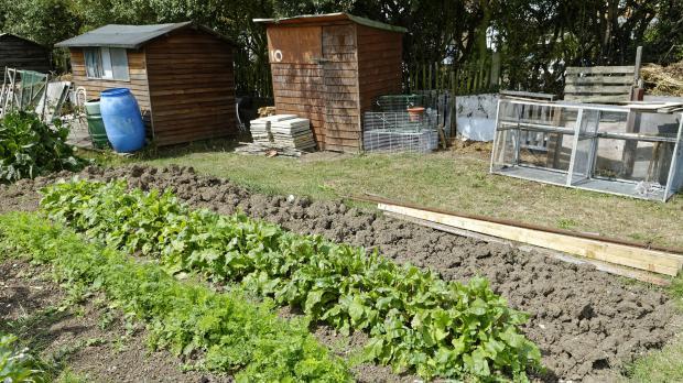 Gemeinschaftsparzelle für den Gemüseanbau
