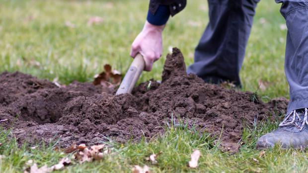 Pflanzloch graben