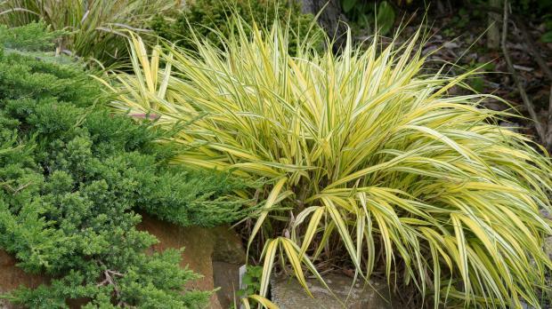 Gräser Garten die 10 imposantesten gräser im garten garten diybook at