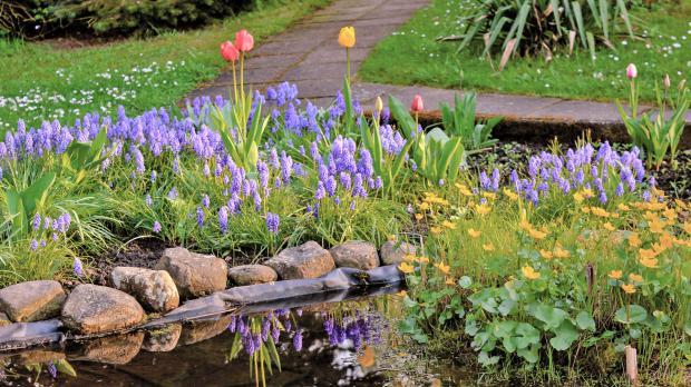 Teichrandpflanzen in Blüte