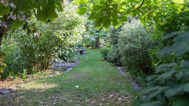 Schattenwurf im Hausgarten
