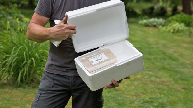 Geöffnete Kühlbox mit Nematoden
