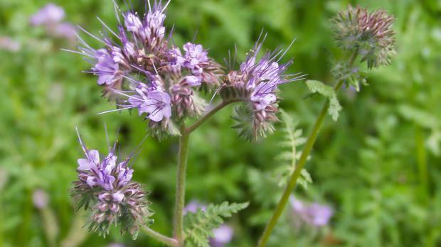 Bienenfreund im Garten