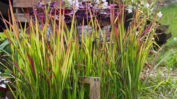 Garten Gräser die 10 imposantesten gräser im garten garten diybook at