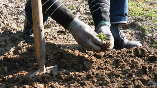 Unkraut entfernen bei der Boden- und Beetbearbeitung