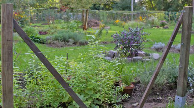 Klettergerüst Für Pflanzen : Rankhilfe für brombeeren brombeerspalier bauen anleitung