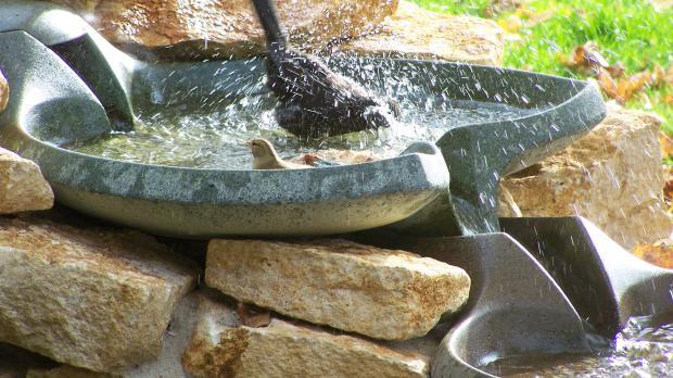 Wassertränke und Vogelbad