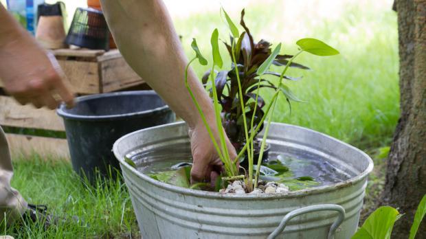 wassergarten anlegen mini teich bepflanzen