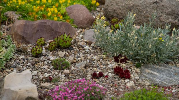 Steingarten Gestalten steingarten gestalten tipps für das eigene steinbeet garten
