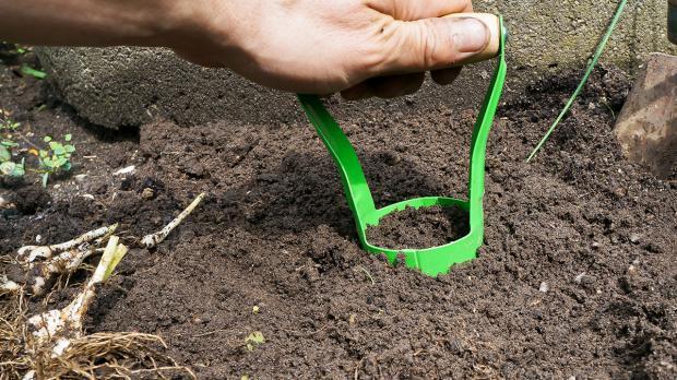 blumenzwiebeln pflanzen ausgraben vermehren und. Black Bedroom Furniture Sets. Home Design Ideas