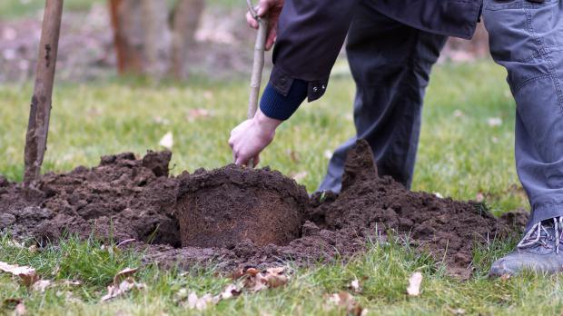 Baum Umpflanzen junge bäume umpflanzen anleitung tipps diybook at
