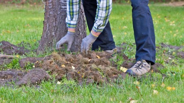 Baumscheibe mit Grasmahd bedecken