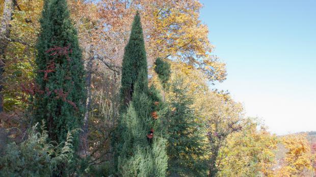 Herbstlicher Garten mit Koniferen