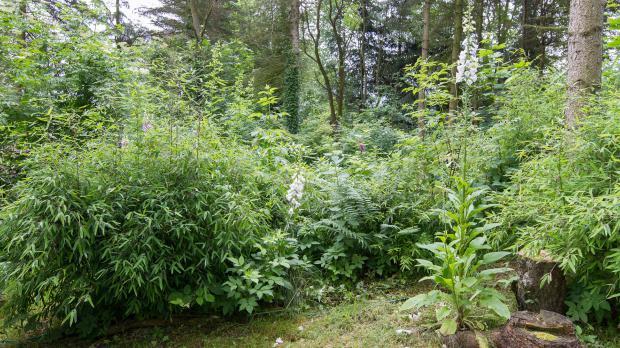 Waldgarten in Schattenlage
