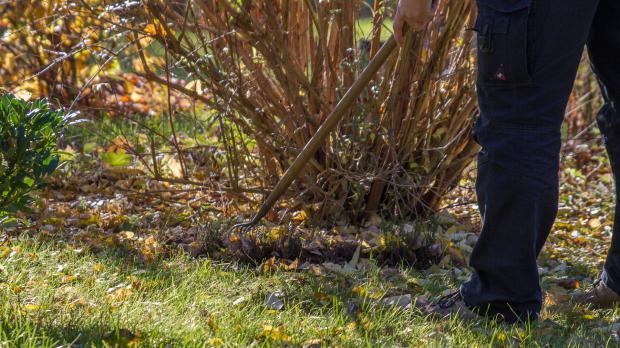 Baumscheiben mit Harke auflockern