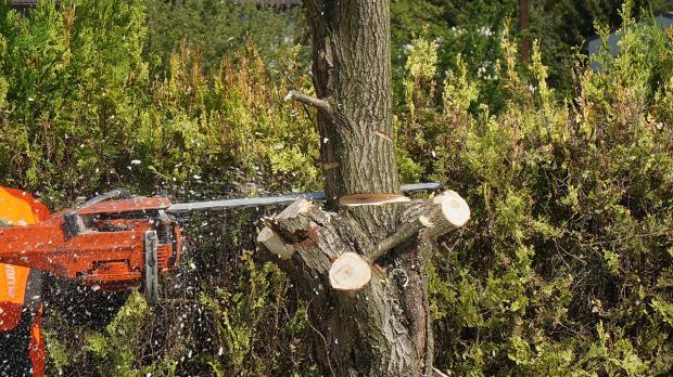 Nur noch der Baumstumpf steht
