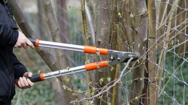 Zweige zum Nachbarn stutzen