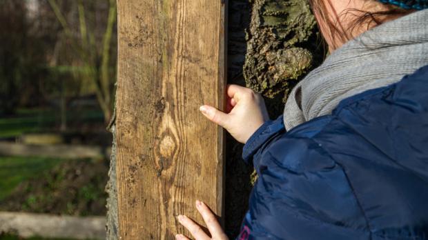 Obstbaum vor Sonneneinstrahlung schützen