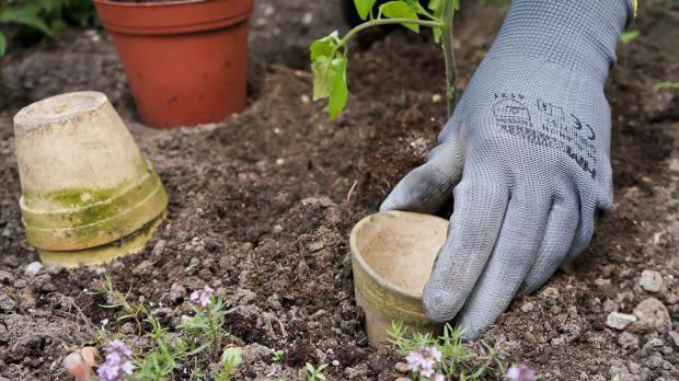 Klettergerüst Tomate : Der nutzgarten im mai tipps und tricks vom gärtner @ diybook.at