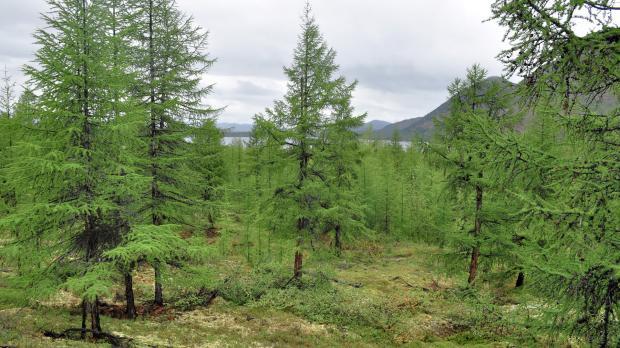 Haltbare Holzboden Verschiedene Holzarten Eigenschaften ~ Kreative ...
