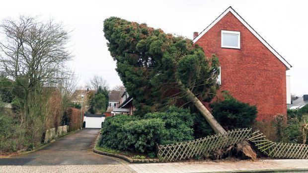Umgestürtzter Baum