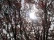 Sonnenschein im Frühling