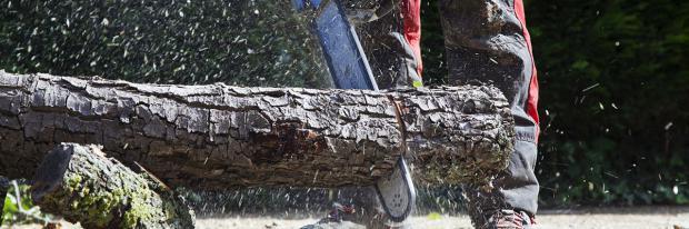 Baumfällung nur mit passender Ausrüstung