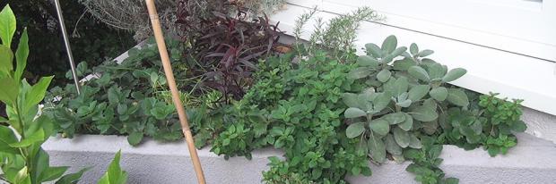 Blumentrog aus Beton abdichten - Undichter Blumentrog aus Beton mit Bepflanzung - Header