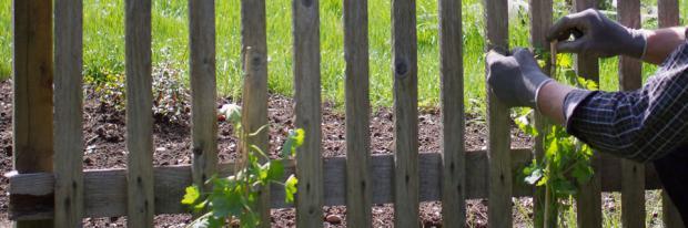 Kletterpflanzen an Trennwand anbringen