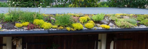 Mit Steingartenpflanzen begrüntes Dach