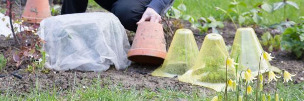 Töpfe und Hauben als Frostschutz für Pflanzen